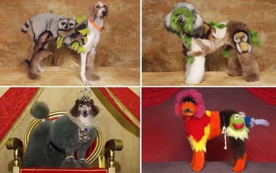 kontes kecantikan hewan