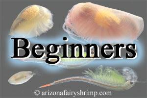 Arizona Fairy Shrimp Clam Shrimp Triops Water Flea Information