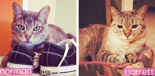 Jessie Pet Collage2