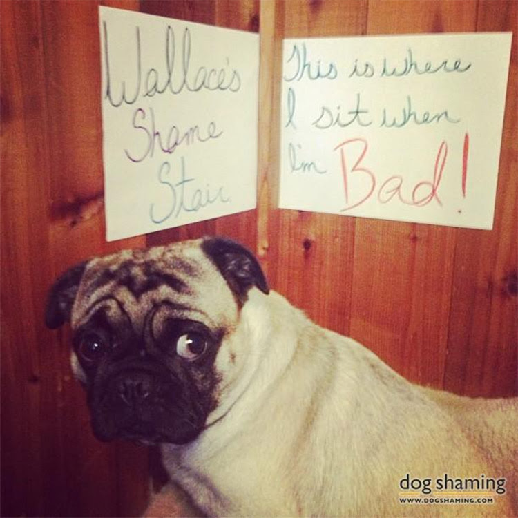 dog shaming 24 32 Hillarious Public Shaming of Dogs
