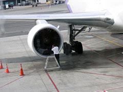 bird in engine