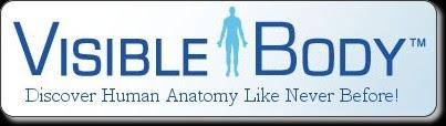 Visible Body | 3D Human Anatomy