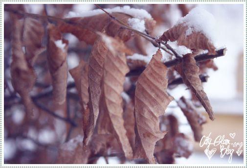 http://i402.photobucket.com/albums/pp103/Sushiina/Daily/snow2.jpg