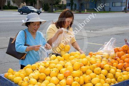 Click Here for purchasing lemons