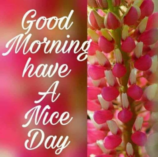 Good Morning Have A Nice Day Flowers Archidev