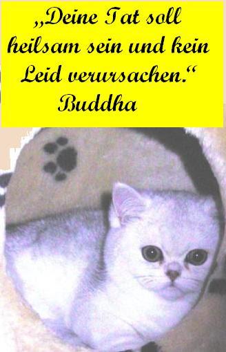 Spruch Buddha-3