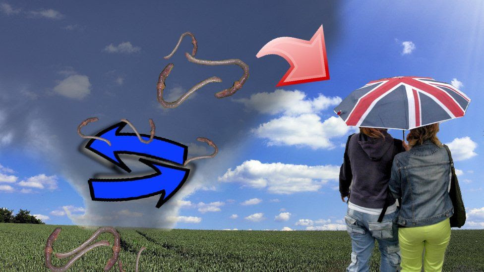 How earthworm rain happens