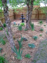 Back shade garden and fountain