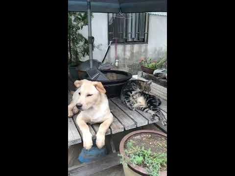和諧的畫面~融洽的狗與貓!轉換心情的影片
