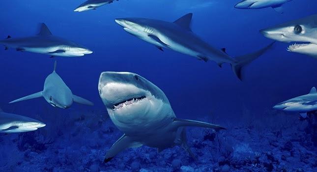 Καρχαρίες – μετεωρολόγοι