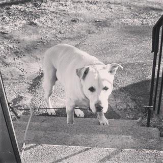 Baby, it's COLD outside #dogstagram #love #bigdog #brrrr