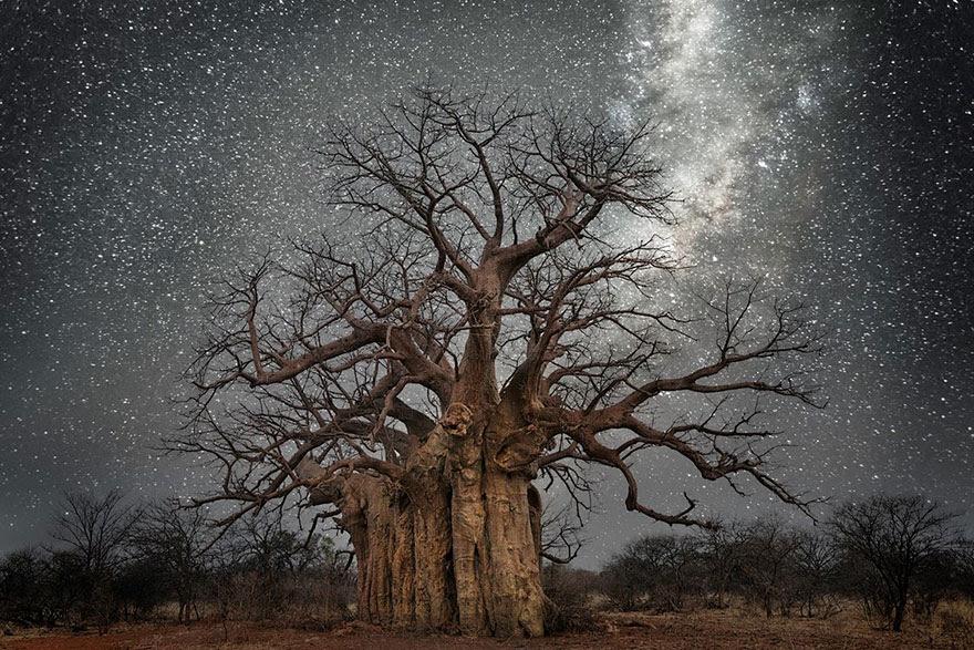 fotos-arboles-viejos-noche-estrellas-beth-moon (1)