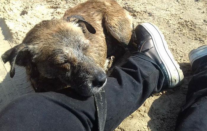 two-boys-save-dog-covered-tart-petro-argentina-17
