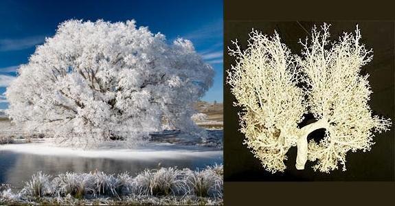 Fractais Árvore-Pulmão