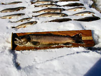 http://www.dnr.state.wi.us/images/news/mediakits/MK_Runoff_deadfish.JPG