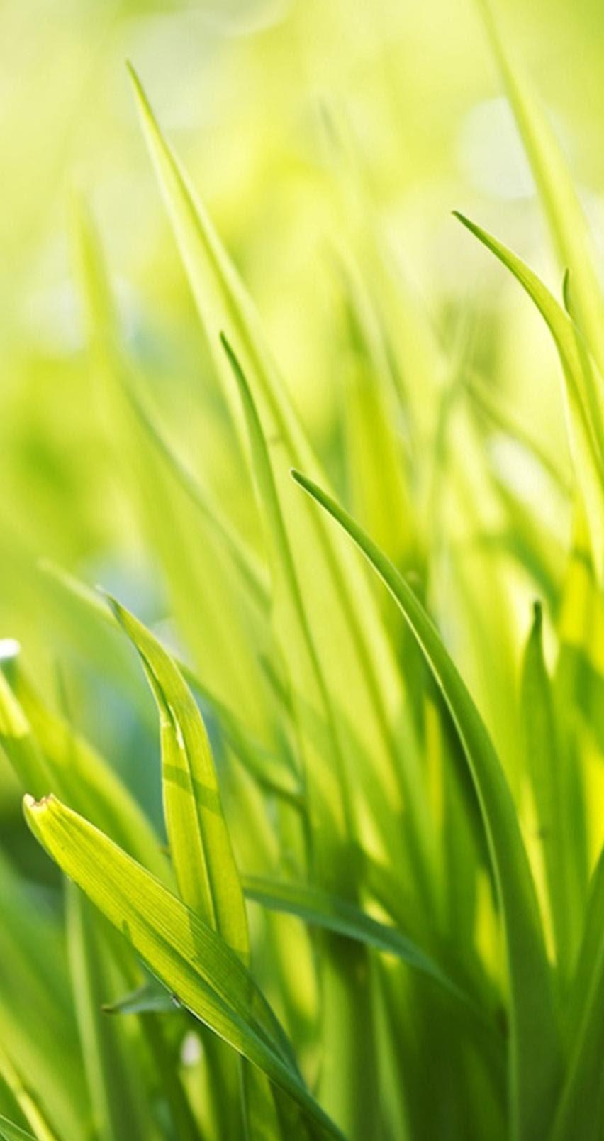Green Grass Nature Close Up Photo Hd Wallpaper Pack Wallpapers
