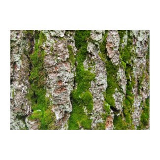 Pine Tree Bark With Stripes of Moss Wall Art