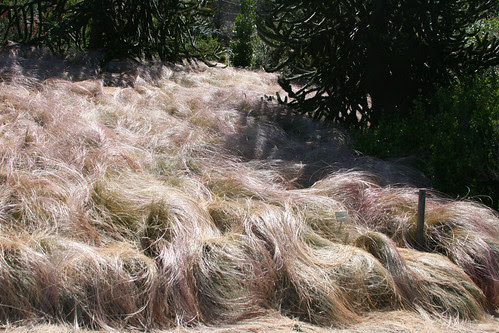 I want this grass!