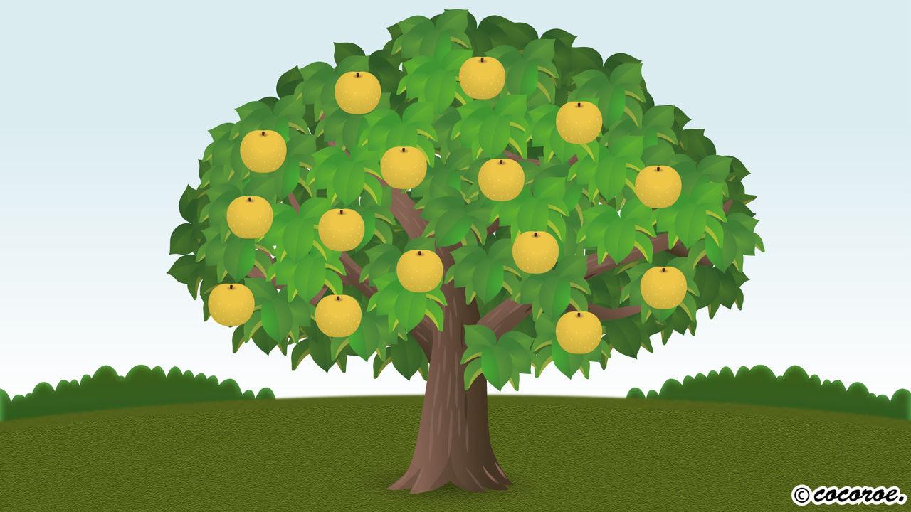 なしの樹のイラスト 説明イラスト イラストレーター モーション