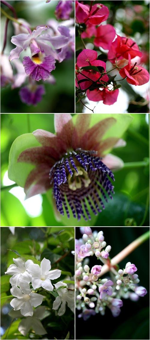 fiori esotici