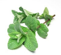 Organic Green Natural Peppermint Dried Herb for Tea Fragrant Tasty Folk Medicine Tummy Soother Only the Best