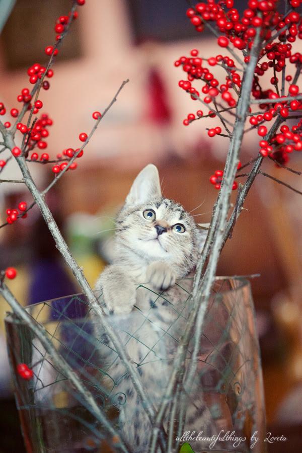 Waiting For Christmas :DDD