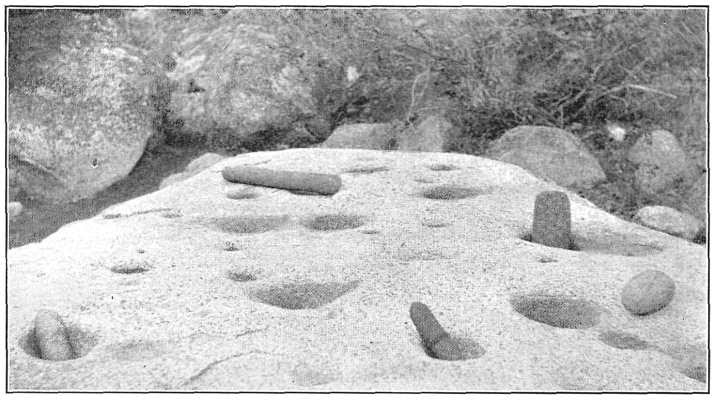 Photo of Hoyas and Metats