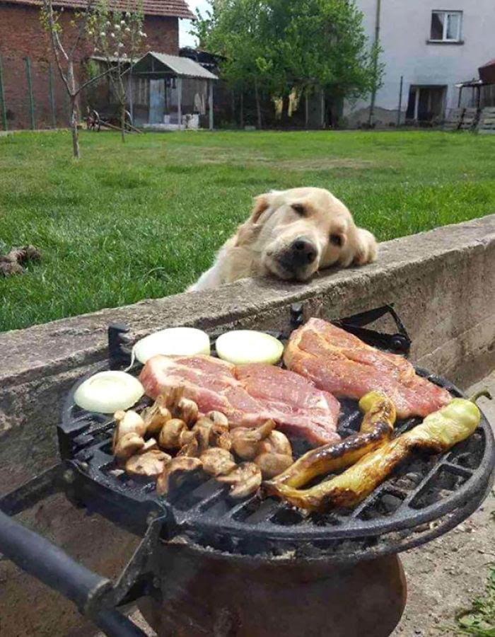 Jour rêvant devant le BBQ