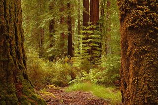 Big Sur - Forest