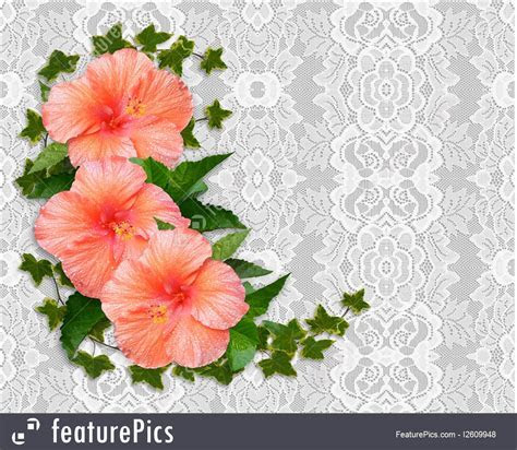 Templates: Hibiscus And Lace Background   Stock
