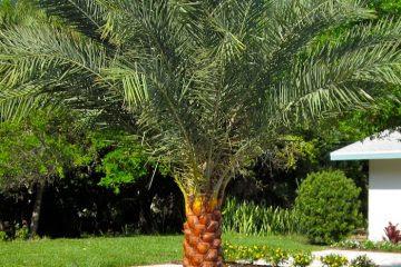 North Florida Plants Palms Trees Shrubs Semi Tropicals Perennials