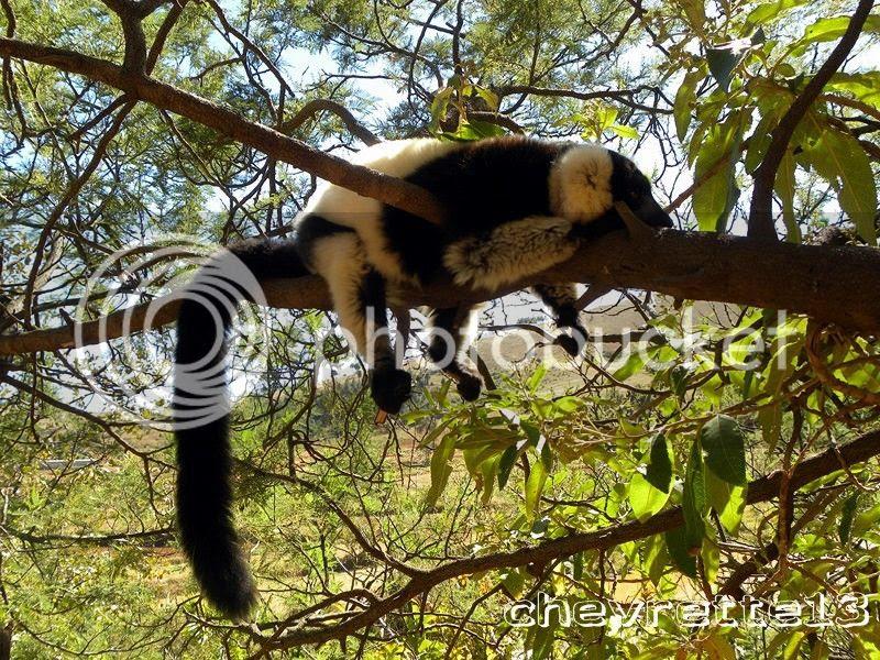 http://i1252.photobucket.com/albums/hh578/chevrette13/Madagascar/DSCN2600Copier_zps48bb4f12.jpg