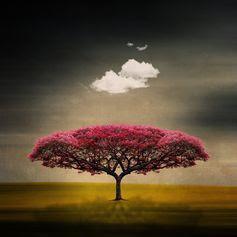 Walking (NYC), a Sense Memory Trigger, 9/11-9/14/14: Medusa Cloud  :  Art.com
