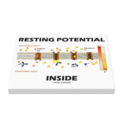 Resting Potential Inside Active Transport Humor Canvas Print