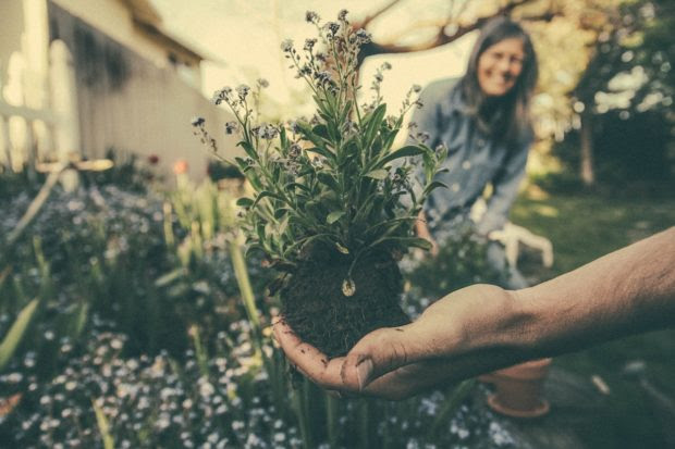 A Basic Guide To Grow Perennial Plants