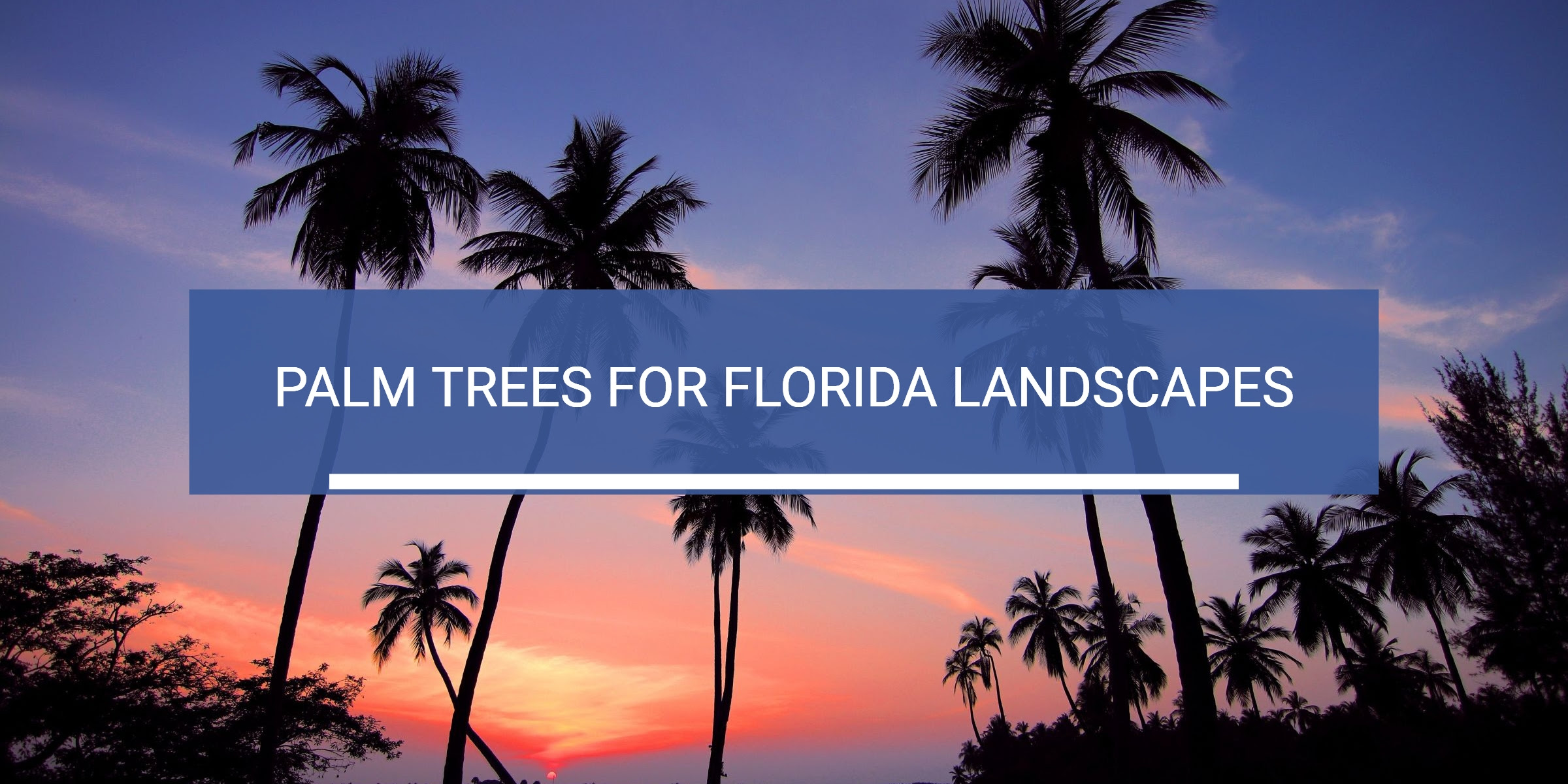 The Best Palm Trees For Florida Landscaping Westcoast Landscape