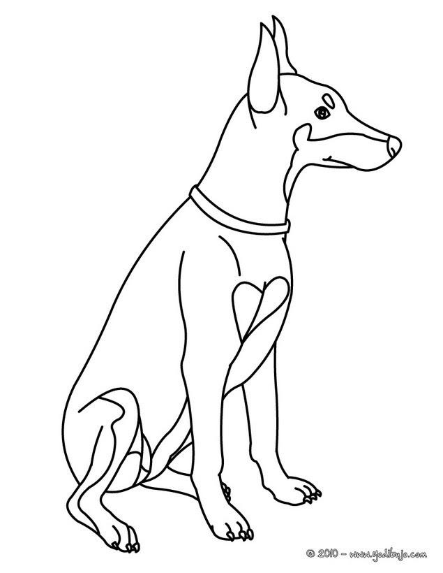 Dibujos Para Colorear Perro Chihuahua Eshellokidscom