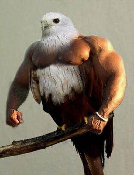100+ Foto Gambar Burung Elang Lucu HD Paling Keren Gratis