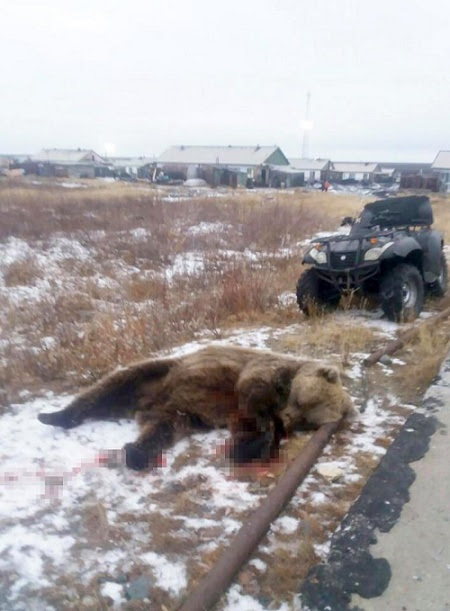 Horror as 6-year-old Boy is Mauled to Death by Rampaging Bear in Front of Twin Sister (Photo)