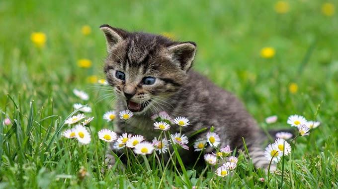 Los olores que más gustan a los gatos