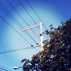 week 43 (electric post)