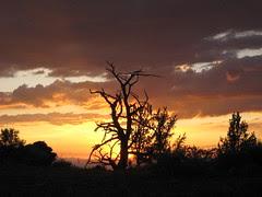 Sunset Behind Bristlecone Pine Forest
