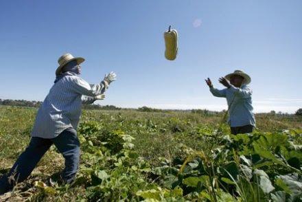 « On peut nourrir 10 milliards d'humains en bio sans défricher un hectare »