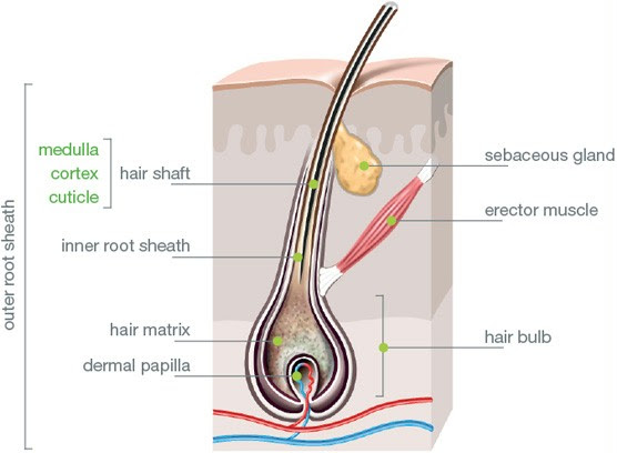 hairstructure