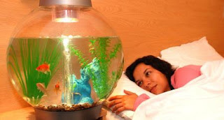 Travelodge goldfish hire therapy trial