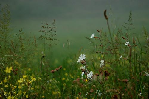 owls-n-elderberries:  mist details by serni on Flickr.