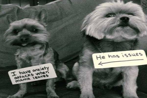 guilty-dogs-1