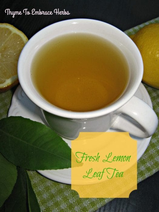 Featured on the Homestead Blog Hop - fresh-lemon-leaf-tea from Thyme to Embrace Herbs