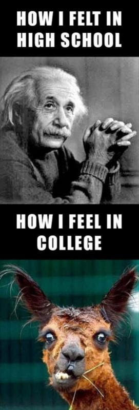 Funny College Quotes Sayings Funny College Picture Quotes