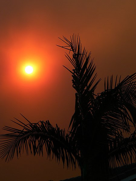 File:Palm tree and sun in smoke SoCal 2007.jpg